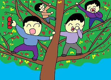 サクランボの木
