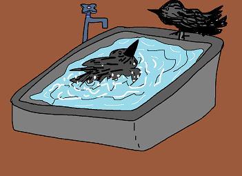 カラスの行水