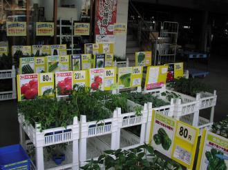 野菜苗H25