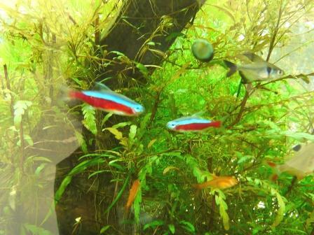筑波実験植物園 お魚たち 1
