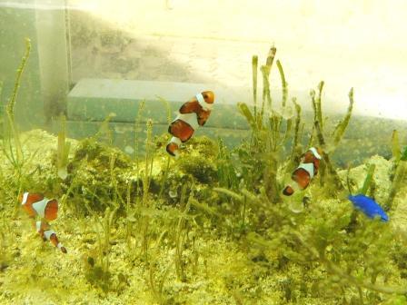 筑波実験植物園 お魚たち 2