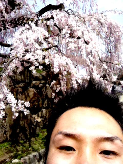 hirosaki_sakura.jpg