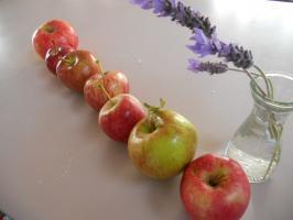Yuta-Apples