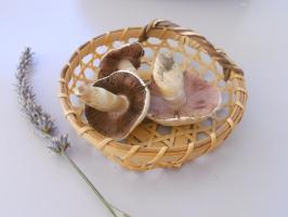 Yuta-mushrooms