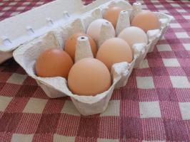 Yuta-Egg in case