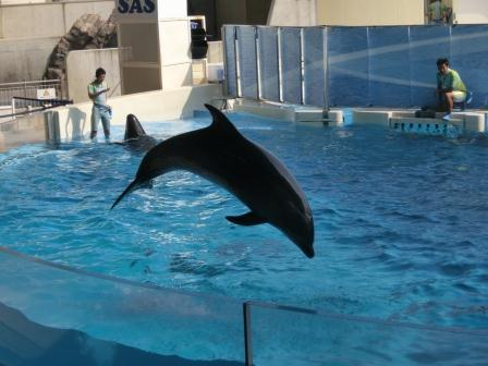 20120726 江ノ島水族館