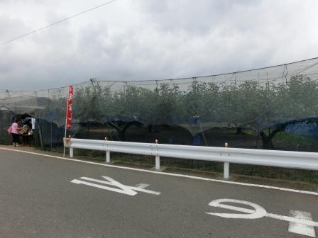 2012 秋の寺家町②