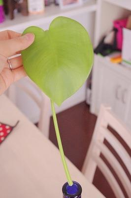 かわいそうな葉っぱ