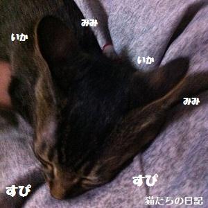 タイガのイカ耳