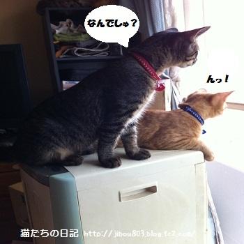 なんかきこえましゅよ!!!