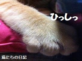 チャチャの手