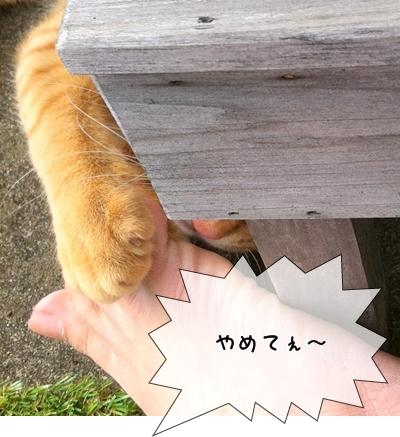 チャ~くん 小指 痛い~