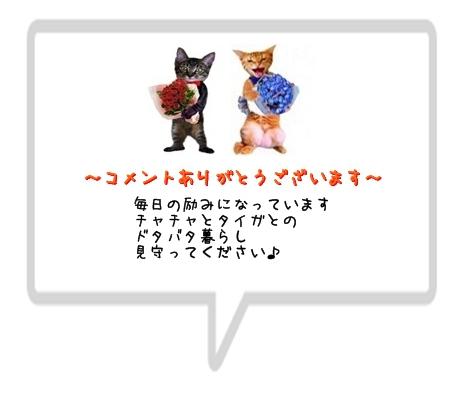 siro haikei5