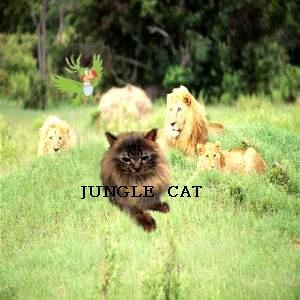 ライオンの 王さまでしゅよ~