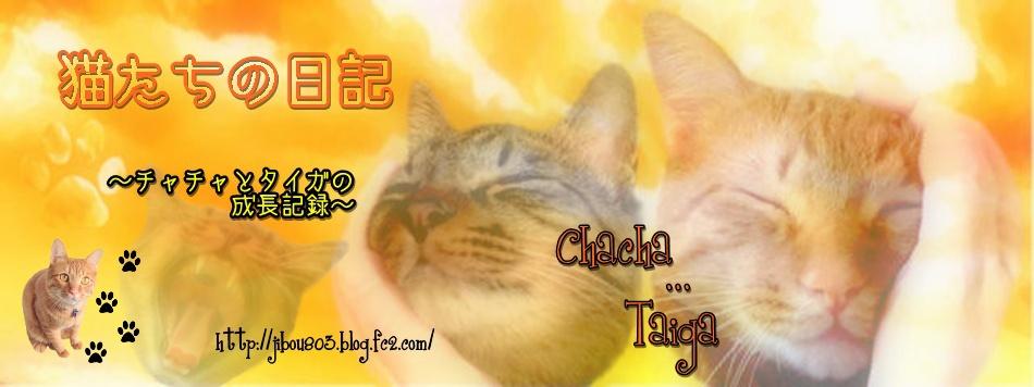 猫たちの日記~チャチャとタイガの成長記録~ http://jibou803.blog.fc2.com/