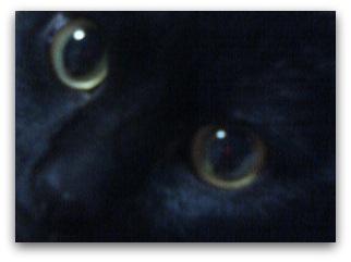 ジジのつぶらな瞳は 忘れられません