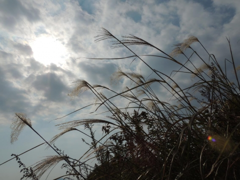 14-11-09-F10.jpg