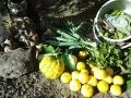 IMG_20141121_090209野菜