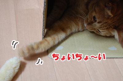 20120604c.jpg