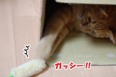 20120604d.jpg