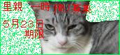 o0172008011940464967.png