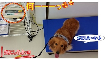 犬太郎体重測定