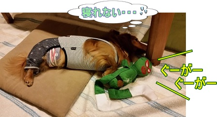 寝れない犬太郎