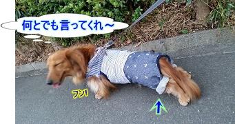 足の短い犬太郎