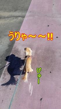 うりゃ~~!!
