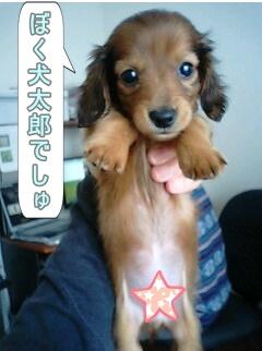 犬太郎でしゅ