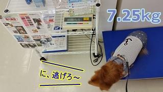 犬太郎測定