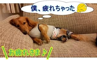 おつかれ犬太郎