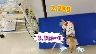 ちゃんこ体重測定
