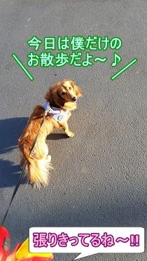 犬太郎のお散歩