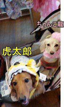 虎太郎・ちゃんこ龍