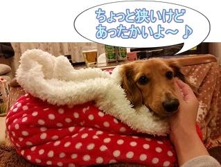 犬太郎寝袋