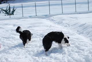 クールダウンには雪が一番