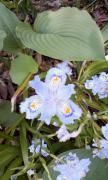 到津の森の花02