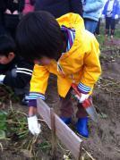 お芋掘り01