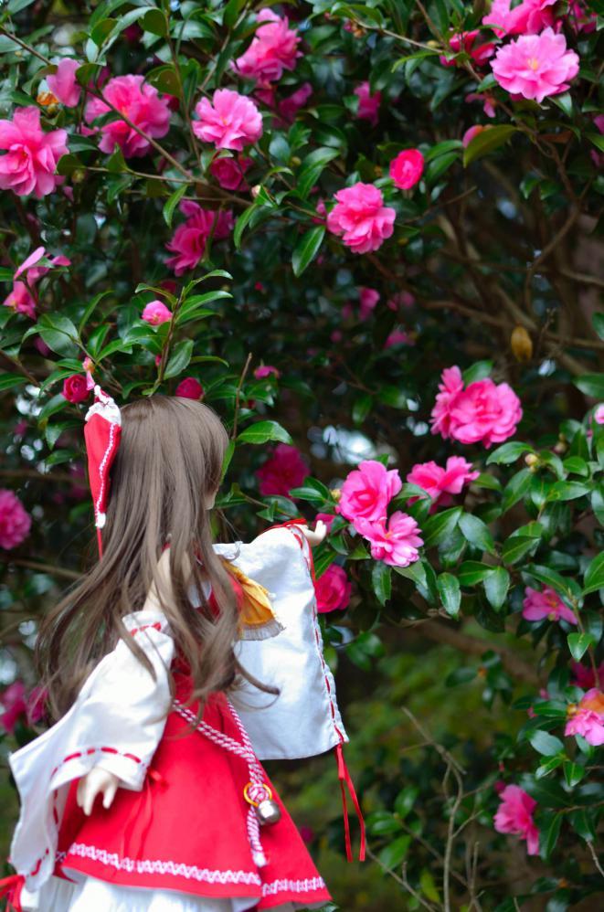 DSC_0124_20121126002049.jpg