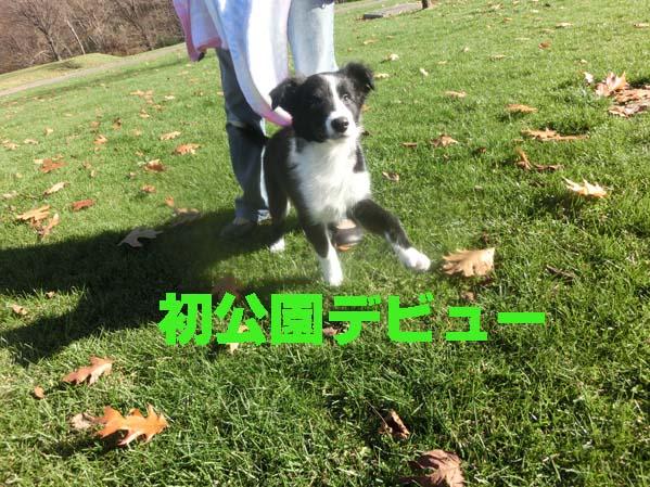 CIMG0243_20121112204844.jpg