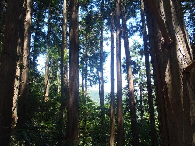 自宅~津久井湖~高尾H24.8 149