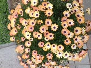 リボディ ゴールデンウィークの花