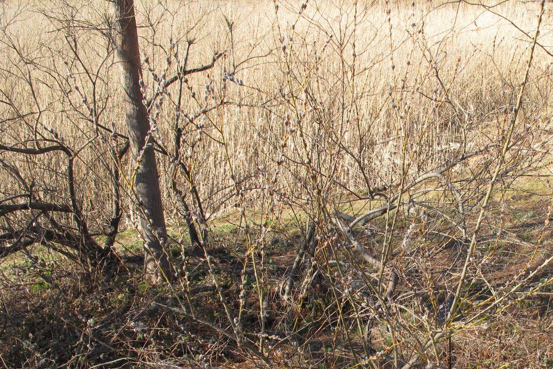 2013年3月5日●S園G_91