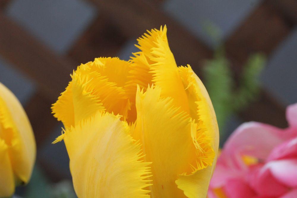 黄色2013年3月5日園_233