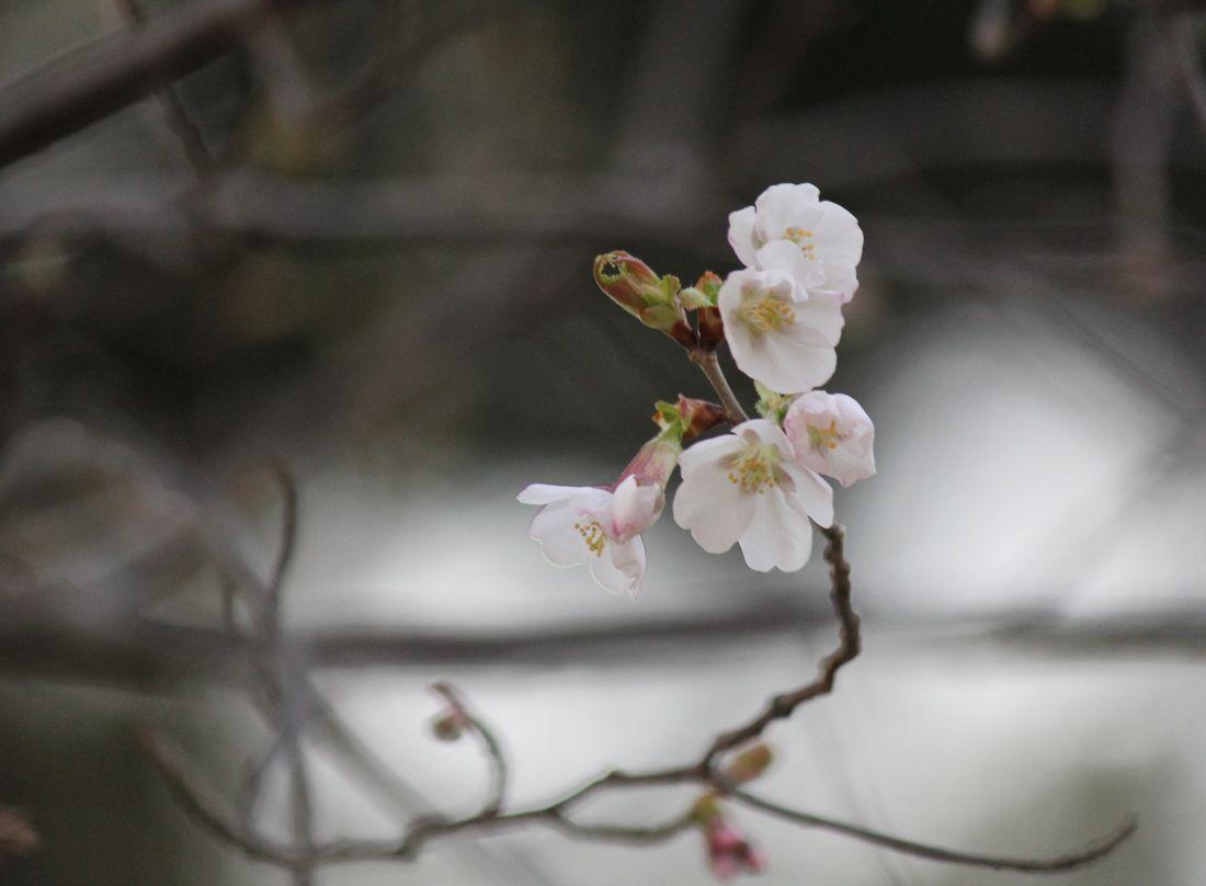 ●S2013年4月4日園山_442