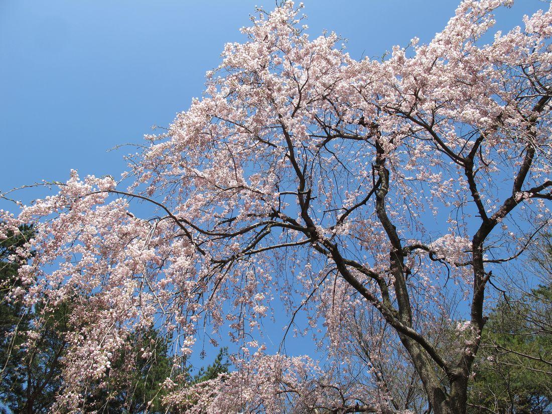 ●S2013年4月9日Gじゅん池_03