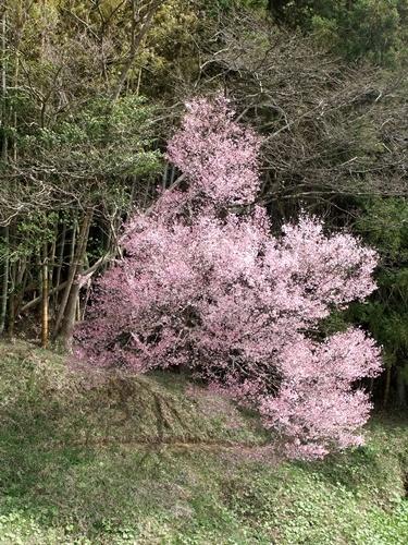 2013.3.20 山下の桜 023 (7)