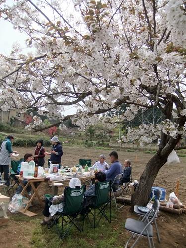 2013.3.29 桜花見会(戸倉農園) 016