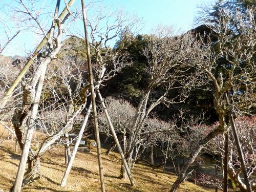 2014.1.12 成田山(初詣)みのる観光 101 (10)